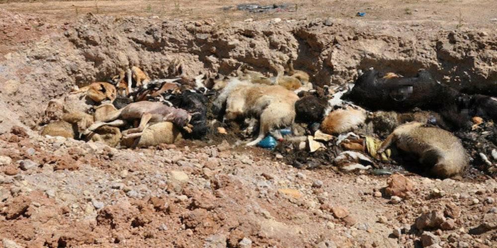 İBB hayvan barınağında vahşet: Bazıları poşetlere konularak yakıldı bazıları da toplu mezarda çürümeye terk edildi