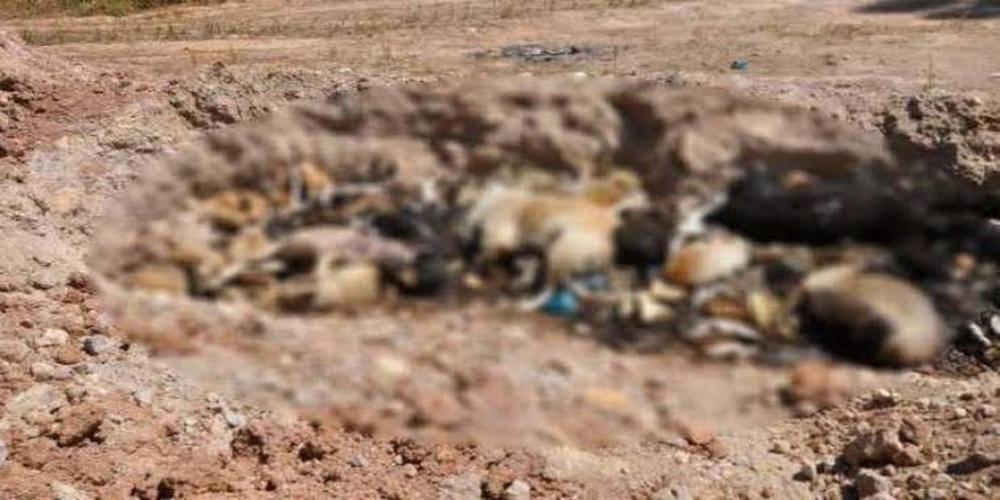 Vatandaşlar İBB'ye isyan etti! Hayvanlar öldü, ormanda açılan çukurlara atıldı…