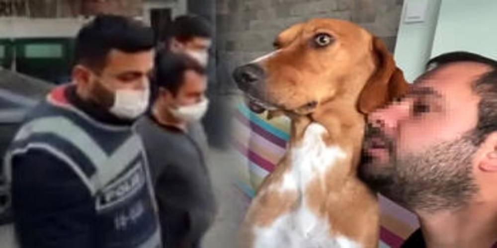 İstanbul'da sosyal medyadan hayvanlara yönelik cinsel içerikli paylaşımda bulunan şüpheli gözaltına alındı