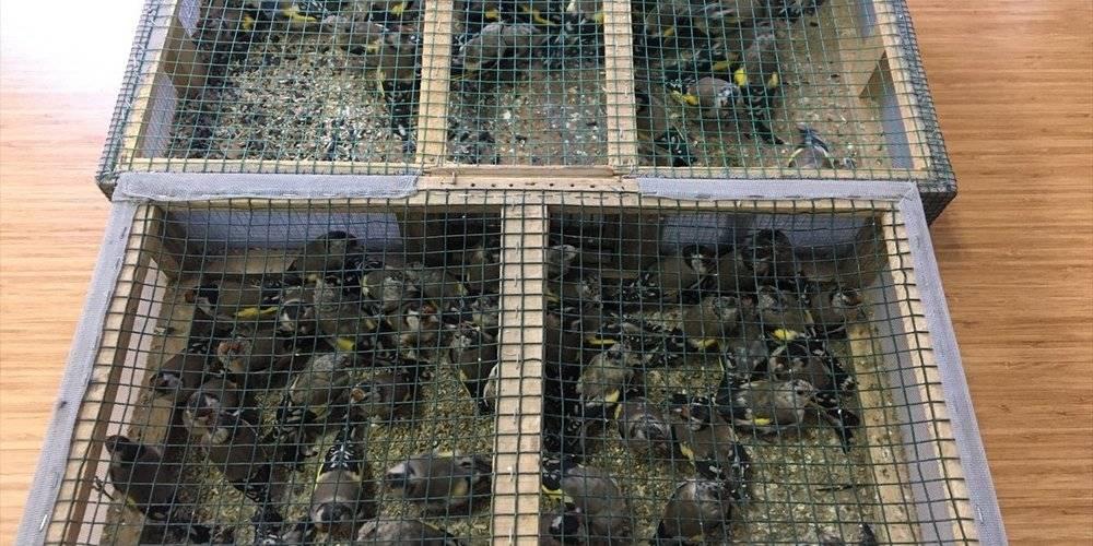 Çevre, Doğa ve Hayvanları Koruma Polisleri görev başında! Adana'da tuzakla saka kuşu avlayan baba ve oğluna 91 bin 350 lira ceza